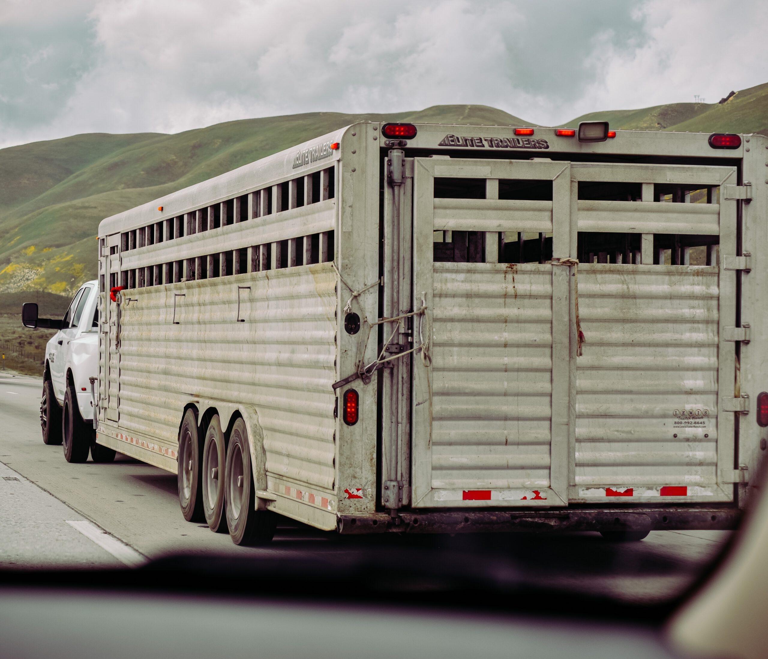 careliner paardentrailers